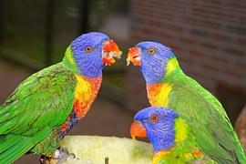 birds-981696__180