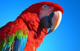 parrot-1192975__180
