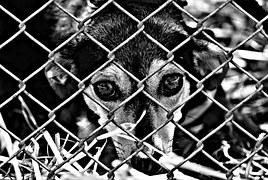 animal-welfare-1116213__180