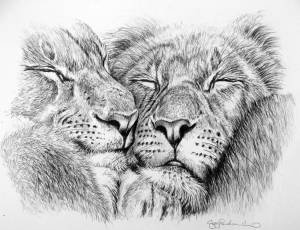 snuggles jo frederiks lion lioness couple mates drawing