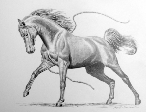jo frederiks drawing prancing horse freedom