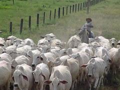 herd-930827__180