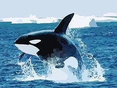 orca-295051__180
