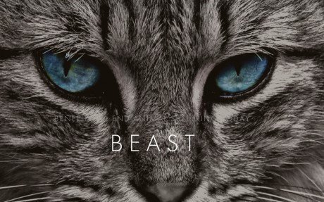 BEAST Ravi DeRossi non-profit animal charity cat
