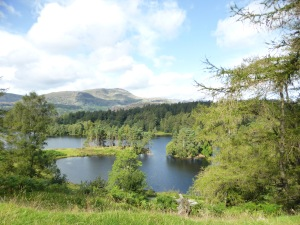 Tarn Hows Lake District Landscape Trees