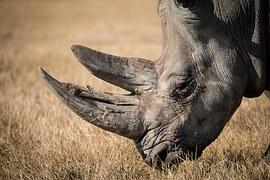 rhinoceros-768714__180