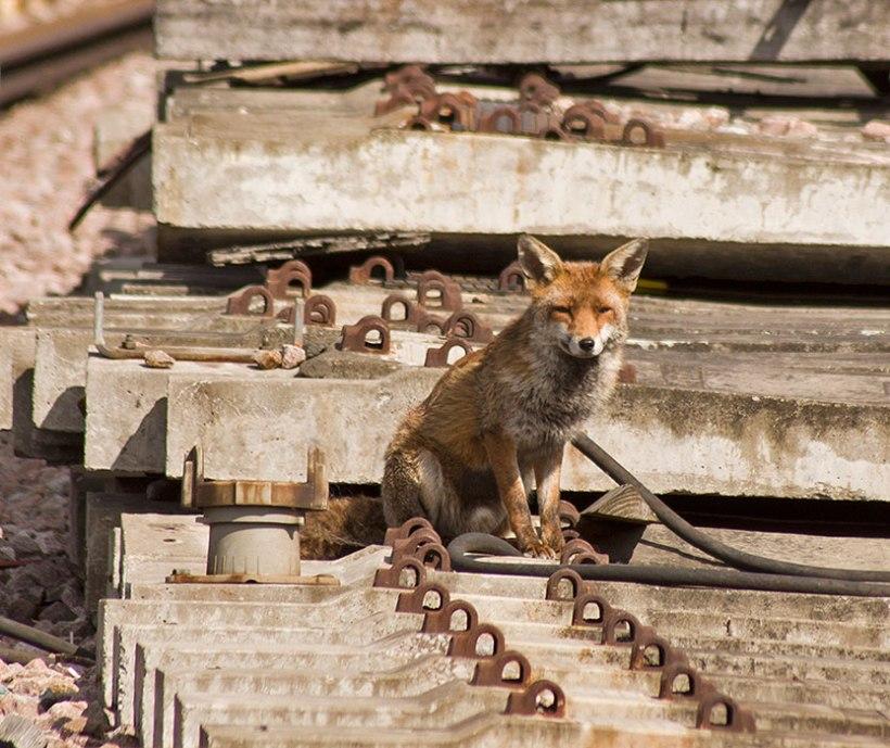 fox_main_AdrianBackshall