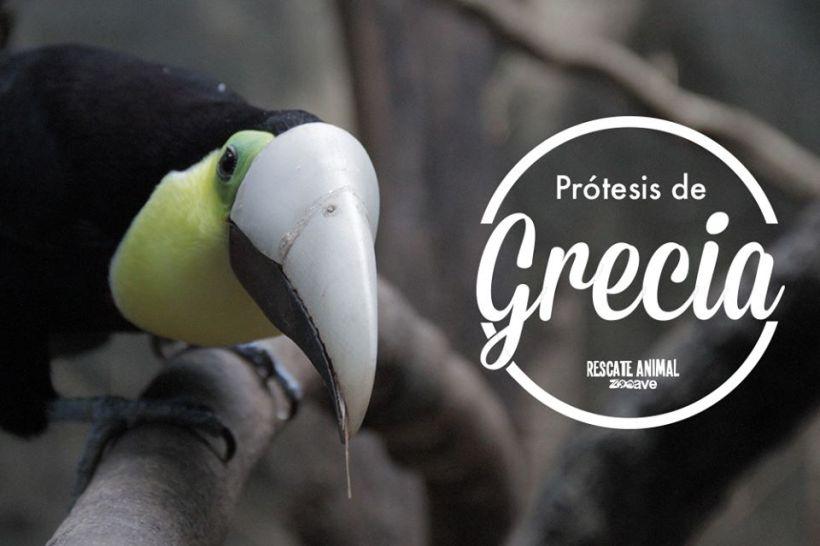 grecia toucan costa rica Rescate Animal ZooAve prosthetic beak