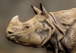 rhino-936288__180