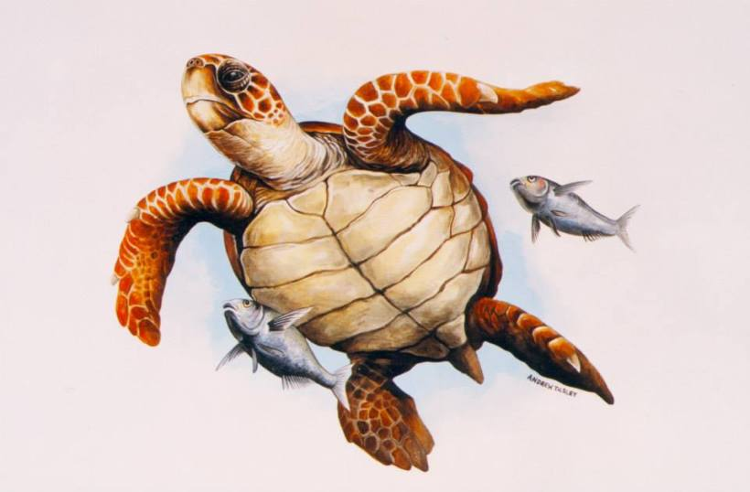 turtle andrew tilsley artwork vegan art costa rica greece fish conservation