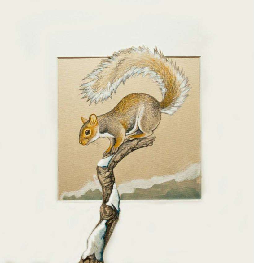 grey squirrel andrew tilsley artwork vegan art pencil gouache pastel paper wildlife