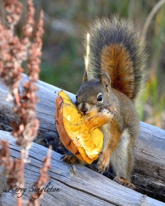 thumbs_squirrel-with-mushroom