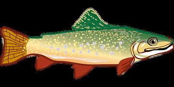 trout-294469__180