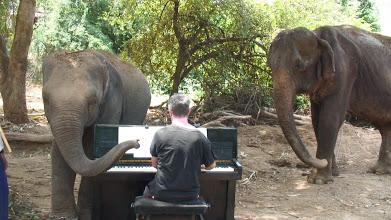 Paul Barton playing piano to elephants santuary music thailand