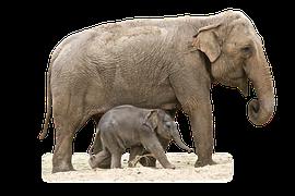 elephant-1049846__180