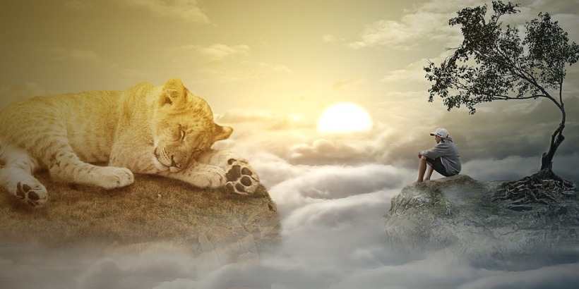 dream big cat lioness clouds sunset planet Earth world wildlife animal sleep dreaming leeping