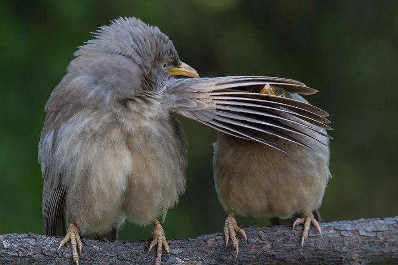 comedy-wildlife-photography-awards-best-photos-2016-20