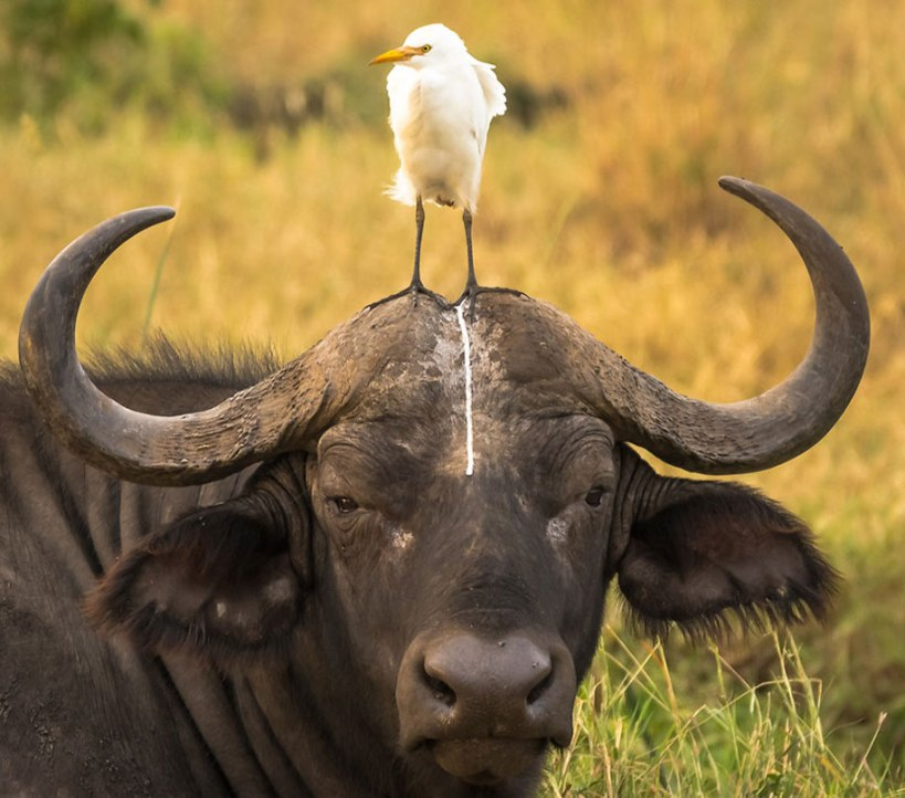 comedy-wildlife-photography-awards-best-photos-2016-21