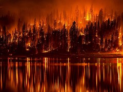 forest fire red black destruction reflection lake