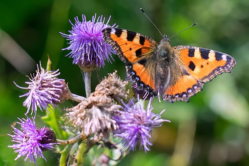 butterfly-1507031__340