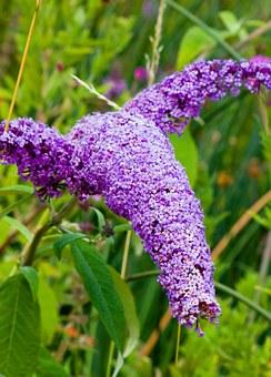 butterfly-bush-164173__340