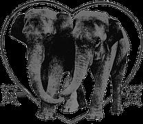 elephants-160153__180