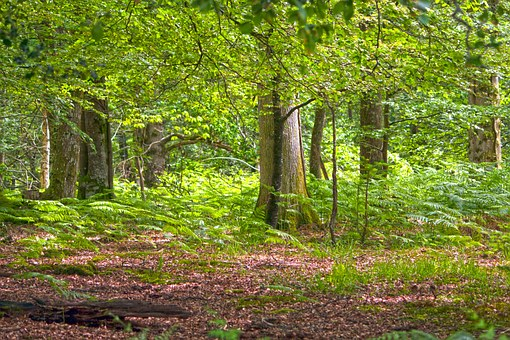 forest-907742__340