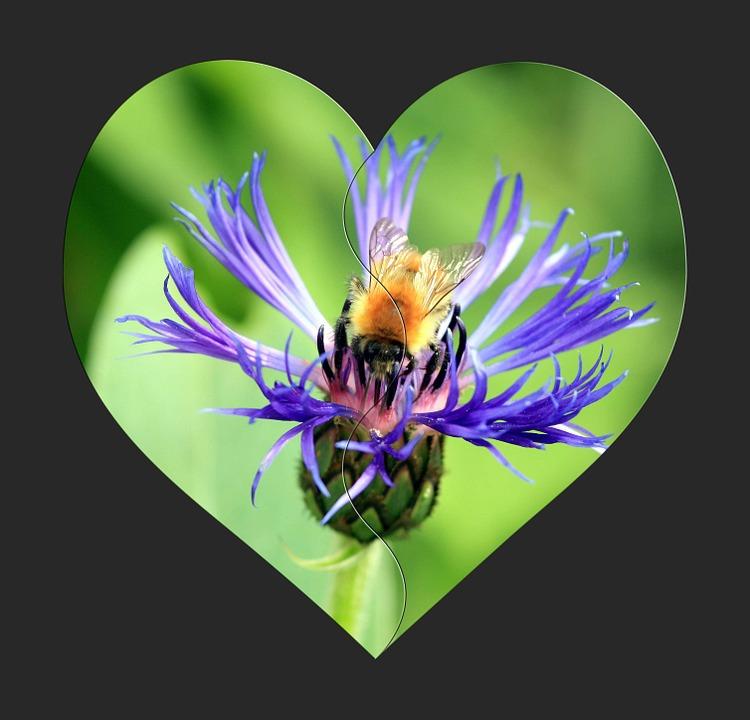 bees wildlife heart love heaven green flowers environment endangered