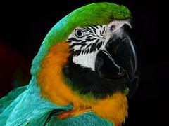 green parrot clever bird