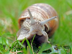 snail shell feelers mollusc grass