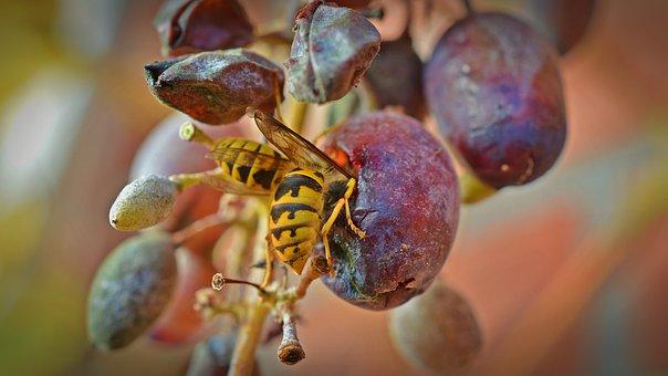 wasps-1780846__340.jpg