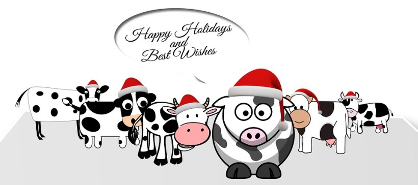 happy christmas holidays cows christmas hats greeting