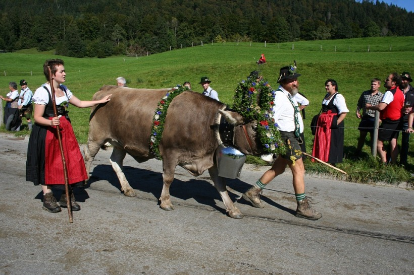 cow-1705571_960_720