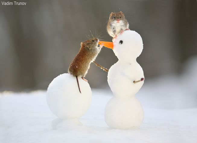 mice-check-out-snowman-jpg-653x0_q80_crop-smart