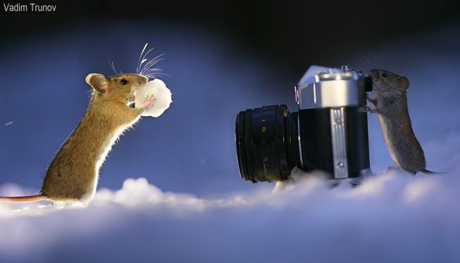 mice-photoshoot-in-snow-jpg-653x0_q80_crop-smart