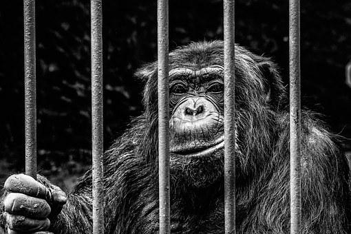 monkey-256420__340