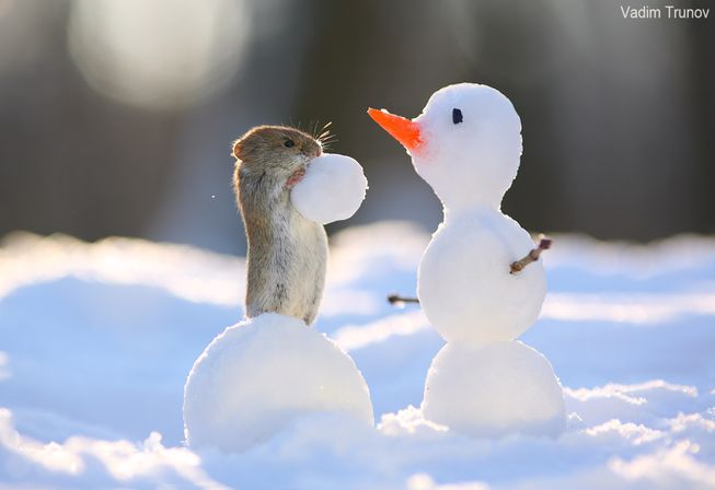 rodent-checks-out-snowman-jpg-653x0_q80_crop-smart