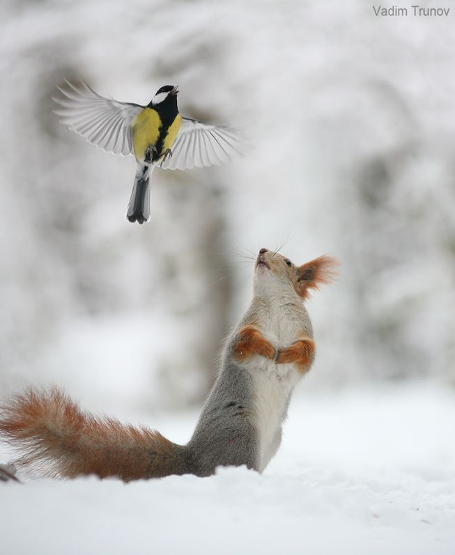 squirrel-watching-bird-jpg-653x0_q80_crop-smart