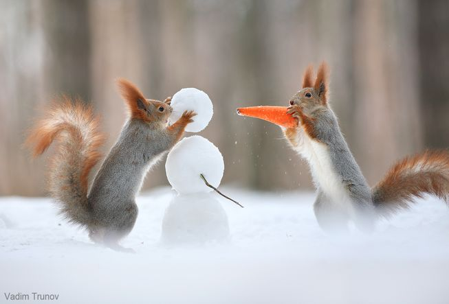 squirrels build snowman carrot nose snowballs wildlife photography