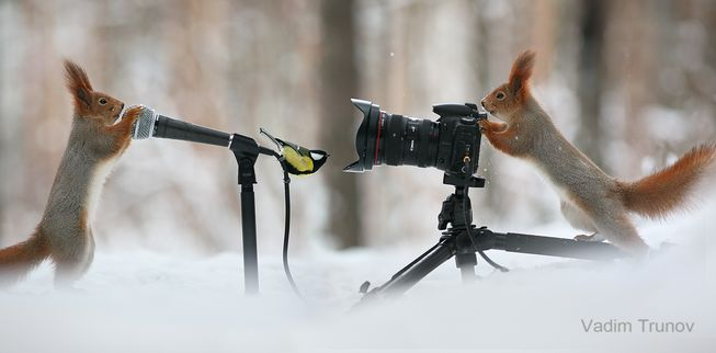 squirrels-camera-microphone-bird-jpg-653x0_q80_crop-smart