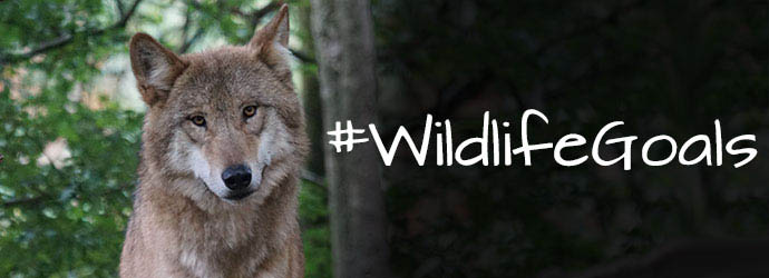 Wolf wildlife goals 2017 Center for Biological Diversity