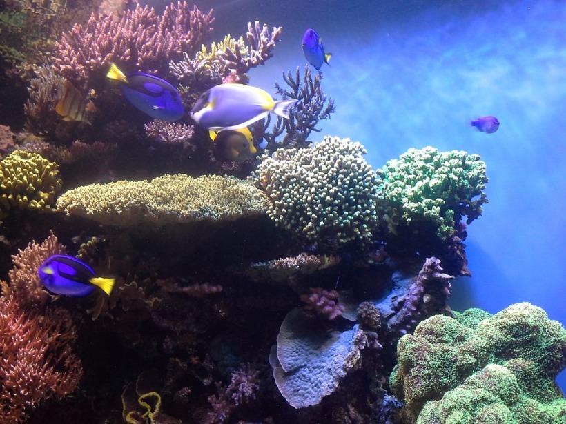 coral-reef-474052_960_720
