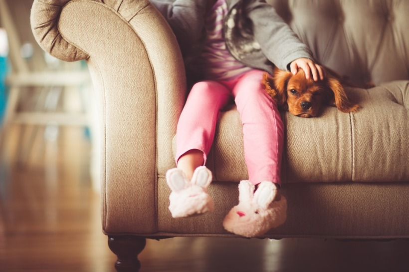girl puppy sofa home pet