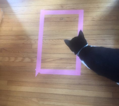cat in taped square