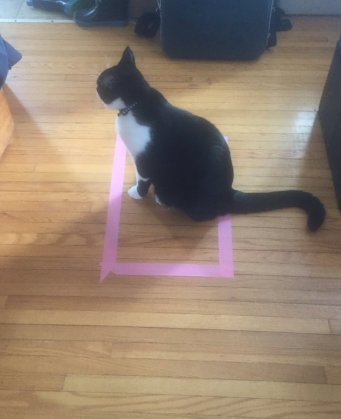 cat sitting in taped square