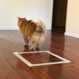 cat in square experiment