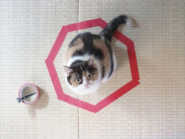 cat-in-tape-heptagon.jpg.838x0_q80