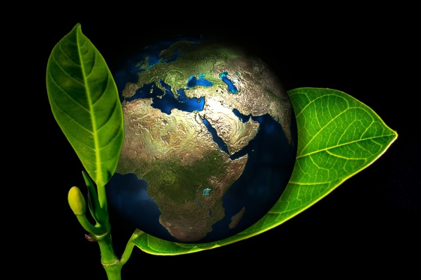 planet earth growing green healthy plant leaves