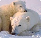 PolarBearFamily_iStock_160X150