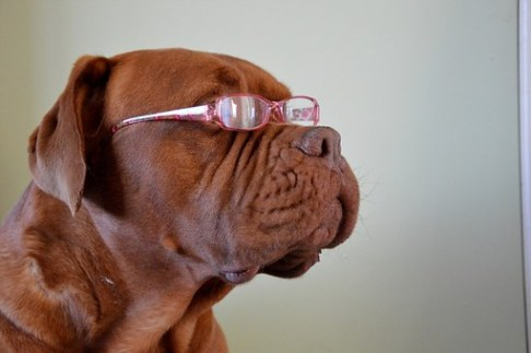 clever dog glasses intelligent
